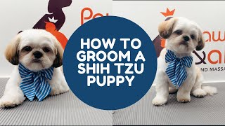 HOW TO GROOM A SHIHTZU PUPPY IN A TEDDYBEAR CUT