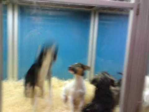 Animalerie paris chien sauteur youtube - Animalerie a paris chien ...