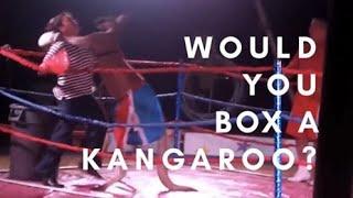 Boxing Kangaroo Owns Woman (Original)