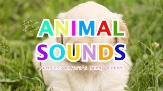 Animal Sounds For Children  - 12 different animals with their funny sounds!