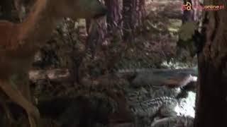 Zwierzęta w lesie – sarny