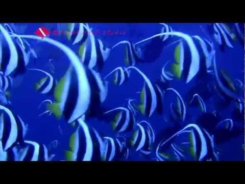 San Agustin - Dive Dayundong 1.mp4