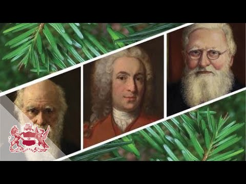 What would Linnaeus, Darwin and Wallace make of Evolution today? | James Mallet