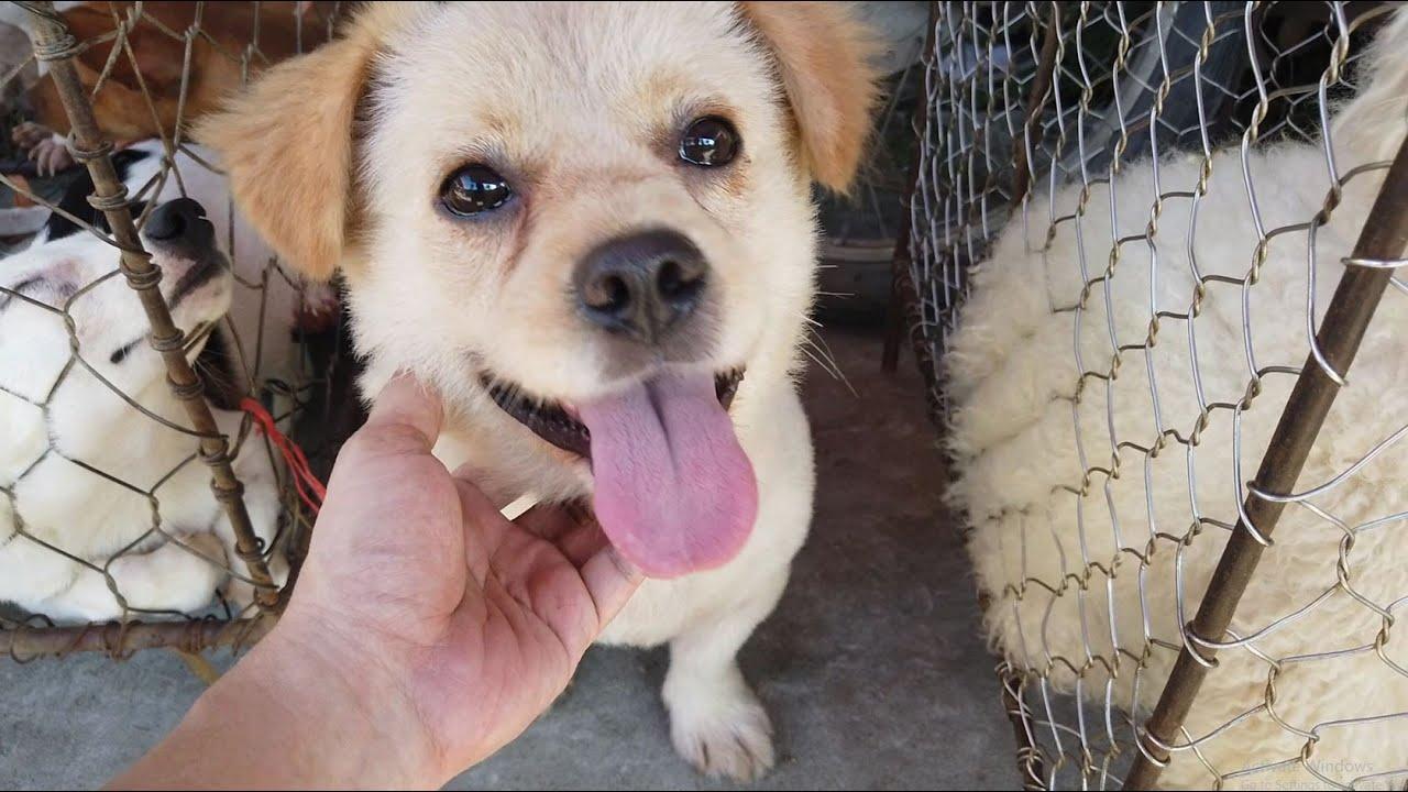 Ngạc nhiên và thích thú với Chợ phiên Chó Mèo thôn quê trong lòng Hà nội | Puppy and kitten market