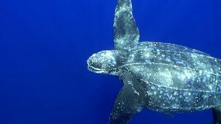 Тринидад и Тобаго: спасение черепах