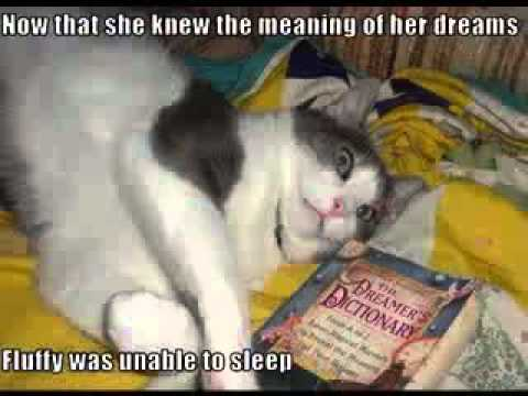 Very Funny cat with words photo gallery860