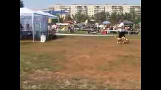 Ринг Китайская хохлатая собака  Белая  церковь 2011.wmv