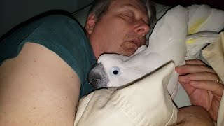 This Cockatoo Won't Go To Bed