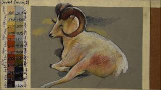 DERWENT Drawing Color Pencils How To Draw A White Animal
