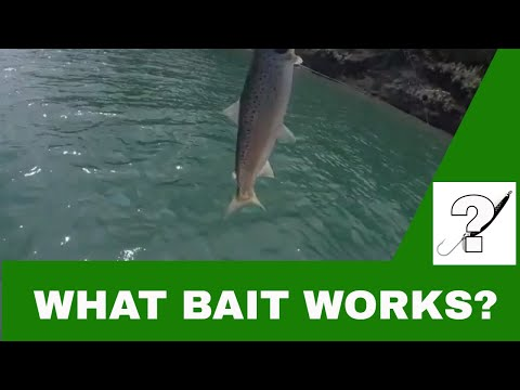 Ghost Lake Alberta Fishing August 2019