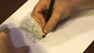 How to Draw Rhododendrons