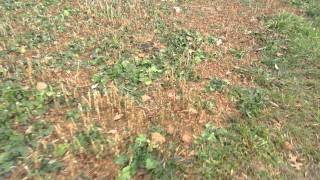 Tini Turnip Salad Plot