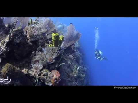 Scuba Diving | Bloody Bay Wall, Little Cayman, Cayman Islands, Caribbean