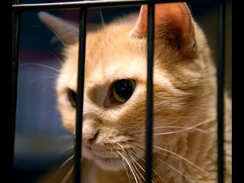 Record number of pets overwhelms Kansas City's animal shelter