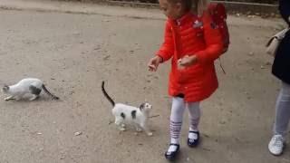 котята у школы