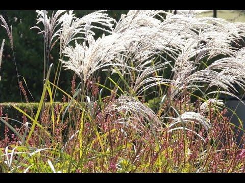 Gartengestaltung: Gräsergärten