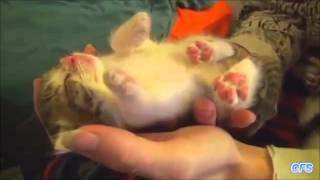 Няшные котята малыши сопят прямо на ладошке - милахи! Самое нежное видео про котят!
