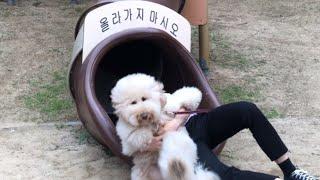 강아지와 둘만의 여행길이 특별했던 이유(부산~경기도)