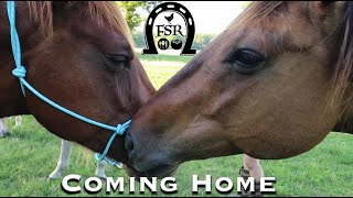 Bringing our New Ponies Home to the New Ranch we are building From Scratch..