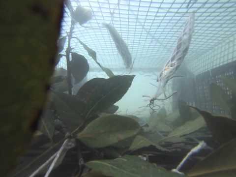 GoPro su Nassa da Pesca: MA cosa sta succedendo?