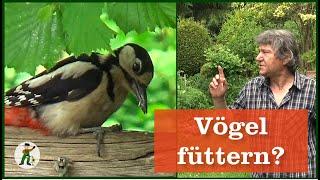 Vögel Füttern Ganzes Jahr