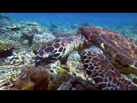 Palawan-Dives-06-Abdeens-South-Miniloc-North-Rock-Paul-Ranky-4K