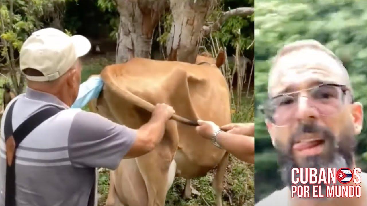 Así fue el proceso de pre-inseminación artificial de las vacas de Otaola, Magaly y Mascarilla