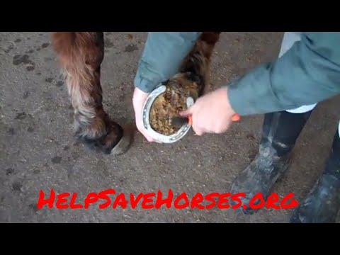 horse hoof pick