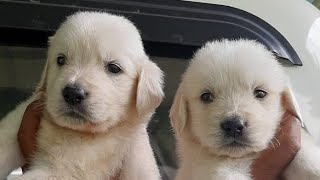Attractive Dogs Sale in Chennai | Dogs Videos | Chennai Dogs |  Puppy Dogs | Dogs Lovers |Fun Animal