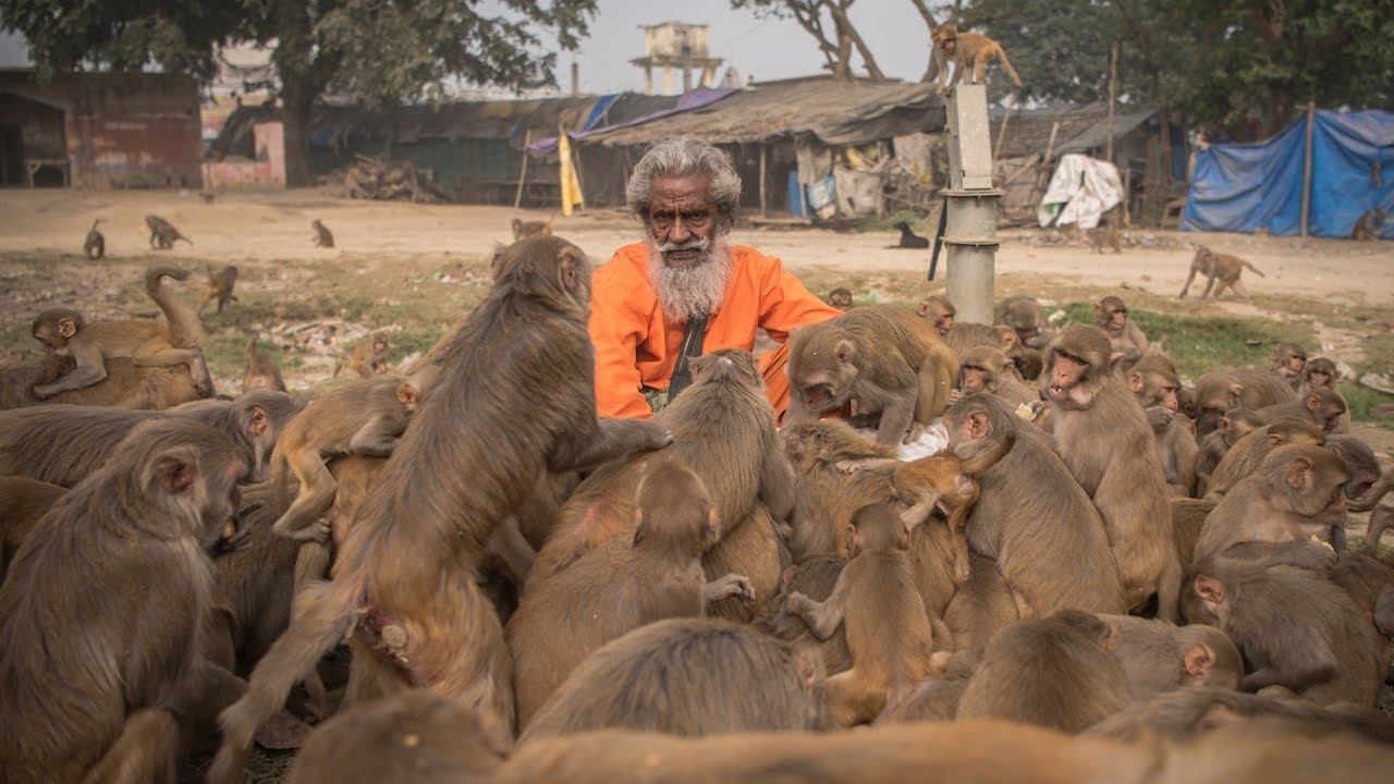 'Monkey Man' Feeds Hundreds of Primates A Day