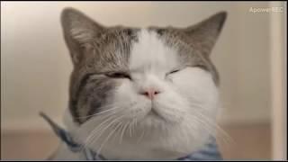 1分鐘搞笑影片vol.7/一招解決幫貓洗澡的問題/貓奴必看