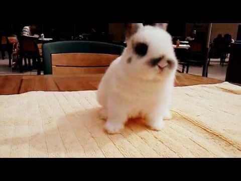 cute baby dwarf bunny   youtube