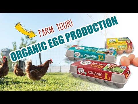 Organic Egg Production | Organic Valley