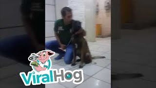 Dog Bites Trainer