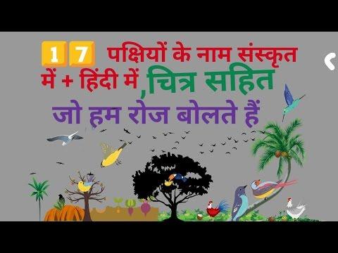 संस्कृत में 17 पक्षियों के नाम,खगः का अर्थ संस्कृत में,संस्कृत शब्दार्थ,name of  birds in snskrit