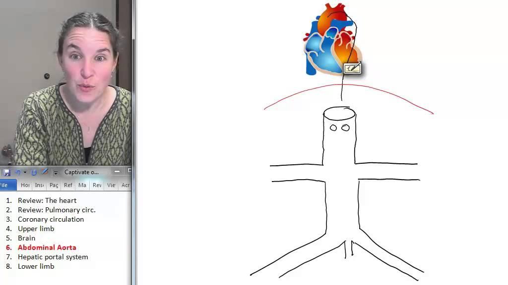 Abdominal Aorta (Peripheral Vasculature) ☆ Human Anatomy Course ...
