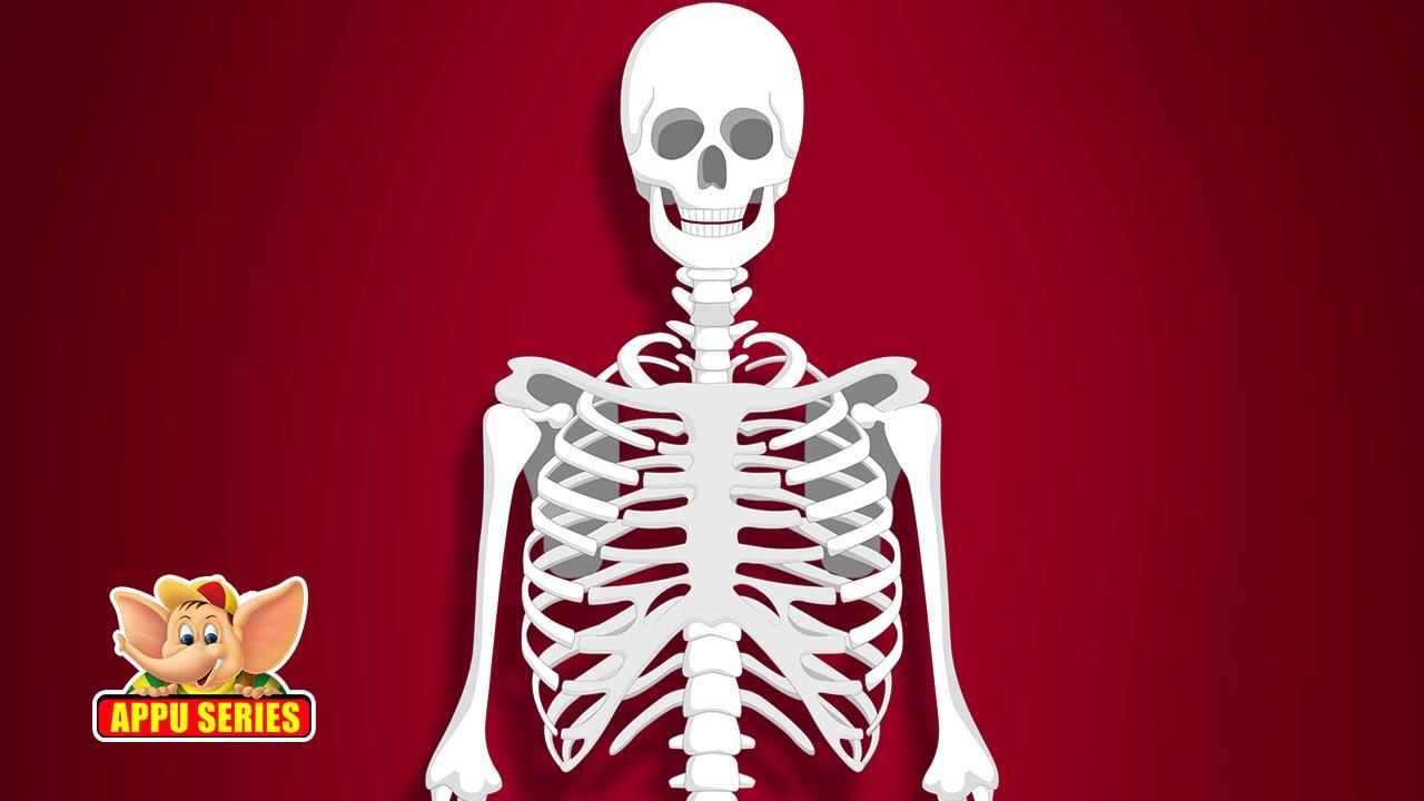 hight resolution of skeletal system diagram labeled with letter big