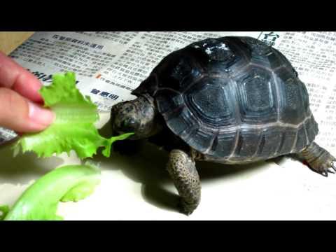 My Baby Aldabra tortoise...www.turtle-family.com