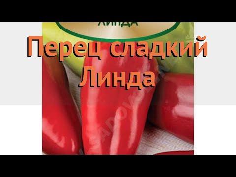 Перец сладкий Линда 🌿 сладкий перец Линда обзор: как сажать, семена перца Линда