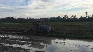 Fiat Tractor 80-66DT ploughing paddy field