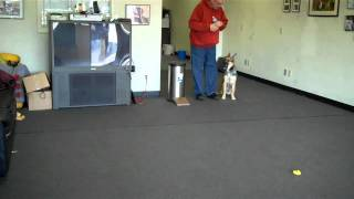 Mans Best Friend Dog Training Presents Cheyenne