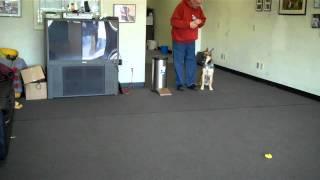 Mans Best Friend Dog Training Presents Cheyenne
