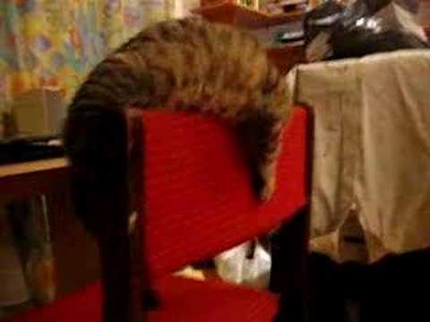 Kot O Imieniu Ocelot Youtube