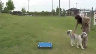 "►►►""dog Training Tutorial"" 2015 