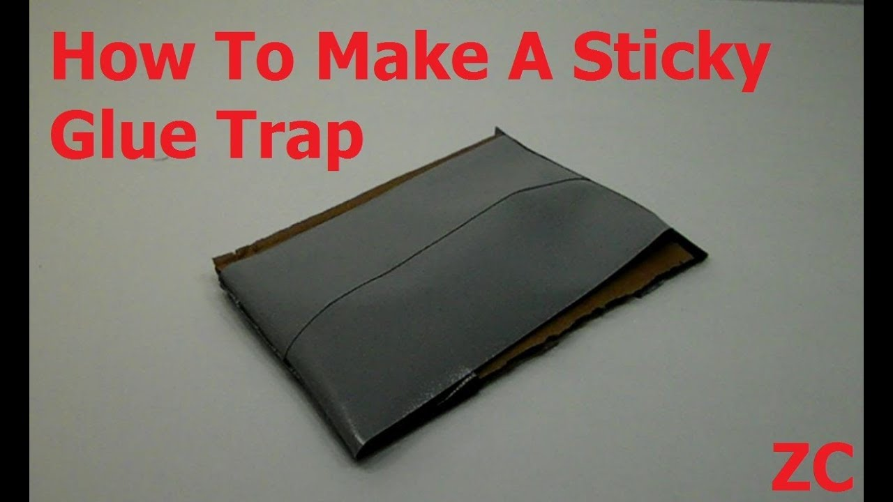 How To Make A Sticky Glue Trap For Pests And Insects Youtube