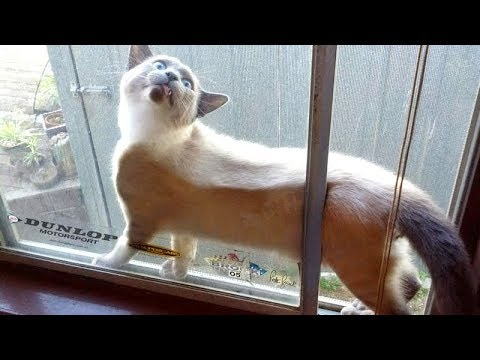 WARNING: You will POOP YOUR PANTS from LAUGHING TOO HARD - FUNNY CATS compilation