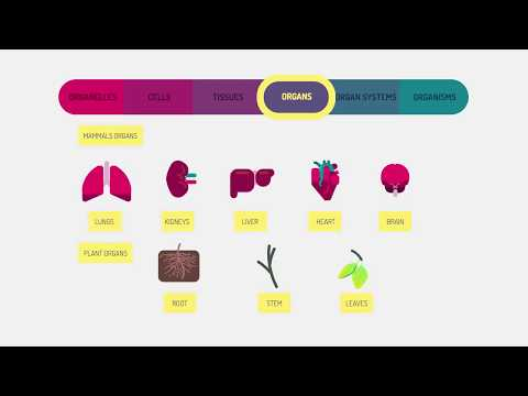 Levels of organisation an organism   best education satisfying video    Paradox Capricious