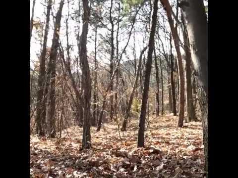 bắt ma trong rừng