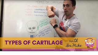 Types of Cartilage | Hyaline, Elastic, and Fibrocartilage