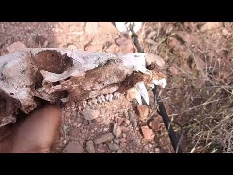 Exploring Abandoned Places And Prospecting Arizona